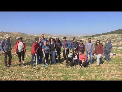 العرب اليوم - شاهد: حاخام يساعد فلسطينيين على زراعة أشجار زيتون