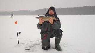 Диалоги о рыбалке. зимняя рыбалка на щуку