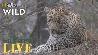 Safari Live - Day 205 | Nat Geo Wild