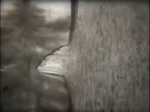 Средства для вывода глистов у человека