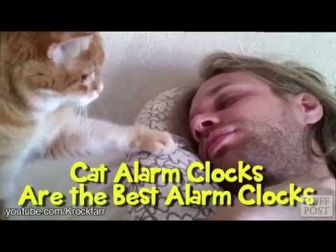 Cats Are the Best Alarm Clock