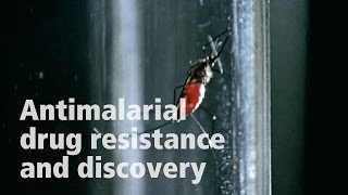 David Fidock on antimalarial drug resistance