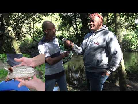 Pescador pesca um Peixe Porco em Juquitiba e Marcos Rossi explica o fenômeno.