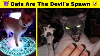 Cats Are The Devils Spawn