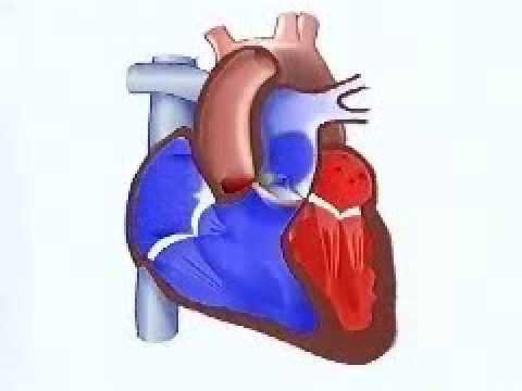 Fármacos recomendados para la hipertensión