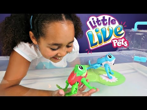 Little Live Pets Frogs & Lily Pad - Frog Race Challenge - Kids Toy Review & Play