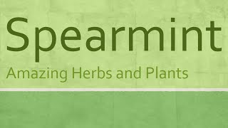 Amazing Benefits of Spearmint - Spearmint nutrition facts - Health benefits of spearmint