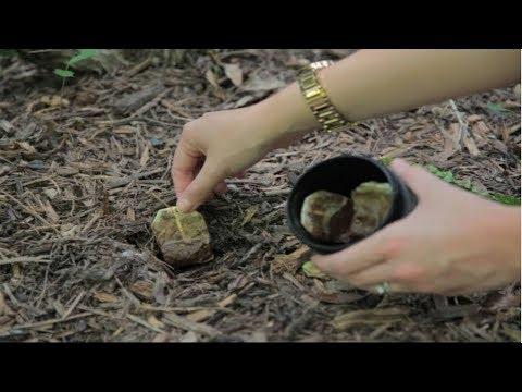 Bury Tea bags in your garden And This Will Happen