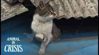 Cat Still Wants A Girl As A Friend Though Got Injured By Humans (Part 1) | Animal in Crisis EP139