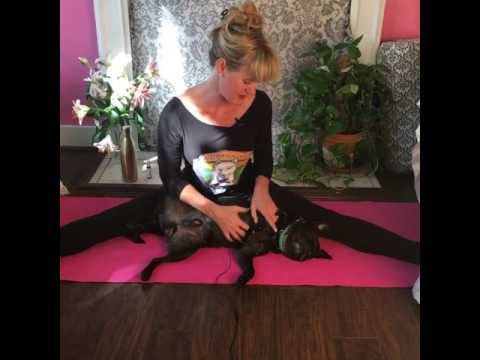 Doga With Kimberly And Mookie #12: Yoga With Your Dogs