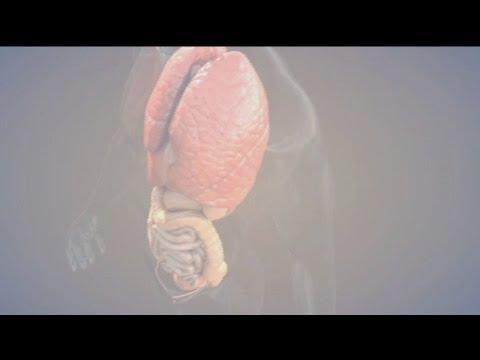 Les exercices sur le renforcement des muscles inférieurs du ventre