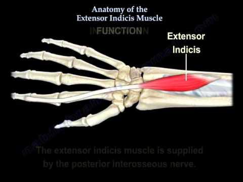 Les exercices totaux aux muscles chez les hommes