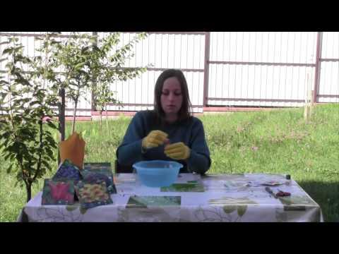 Как обработать луковицы цветов перед посадкой
