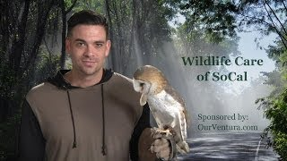 Wildlife Care of SoCal (1min, 24sec)