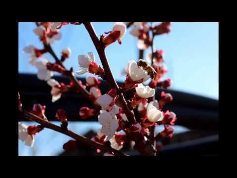 Как сделать чтобы веснушка