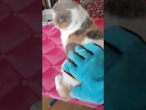Katzen Handschuh Bürste