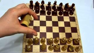 Шахматы для начинающих.