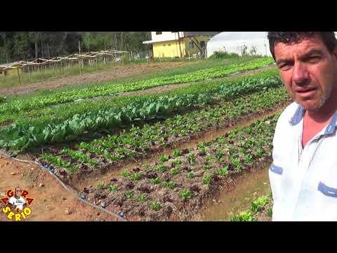 Zé da Sama o Maior produtor de verduras orgânicas de Juquitiba ali pertinho no Bairro do Soares baratinho baratinho