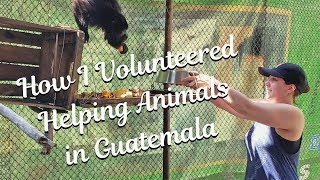 How I Volunteered in Guatemala Helping Animals