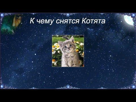 К чему снятся Котята (Сонник)