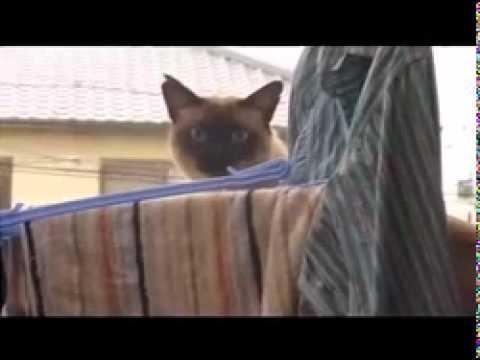 Smieklīgs kaķa lēciens