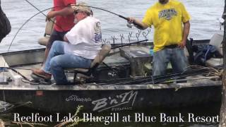 Bluegill Fishing in Frot of the Resort