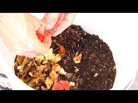 O que você faz com o seu lixo orgânico? Aprenda a fazer compostagem em casa