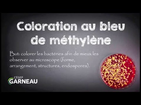 Le microorganisme végétal de longle du médicament
