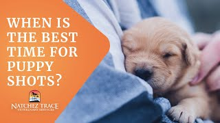 When is the Best Time for Puppy Shots? - Marc Smith, DVM