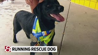 Rescued Dog Shares Love Of Running Half Marathons With Owner