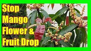 Prevent Mango Flower and Fruit Drop: Mango Flowering Spray