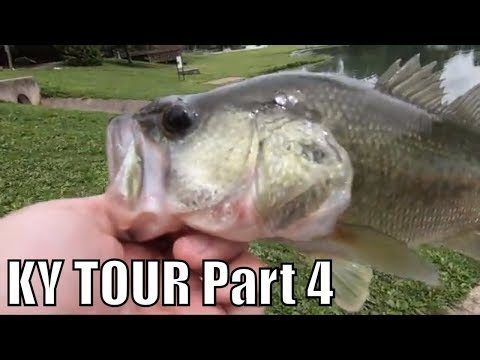 KY Tour Final Day Bank Bass Fishing Lake MIngo Nicholasville