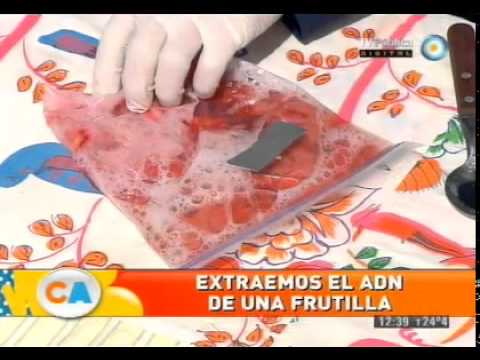 Extracción de ADN de una frutilla