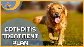Treating Arthritis in Dogs - a plan to keep them pain free!