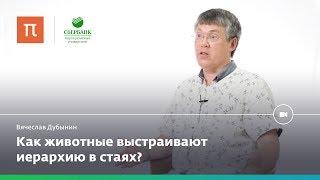 Мозг лидеров и мозг подчиненных — Вячеслав Дубынин