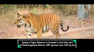Resettlement and Restoration of Livelihoods of Tribals displaced from Satpura Tiger Reserve, MP