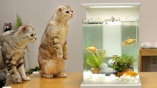 고양이와 금붕어 어항 꾸미기 - 고양이들 반응