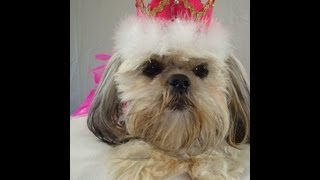 Princess crown top hat for dogs