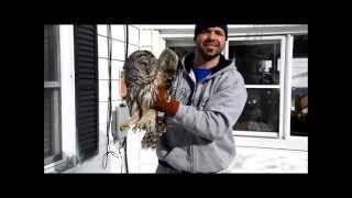 Barred owl crashed into our house!