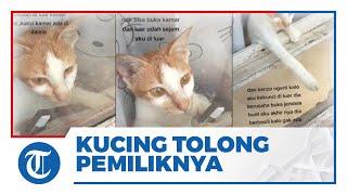 VIRAL Video Kucing Buka Jendela Kamar Pemiliknya yang Terkunci dari Luar