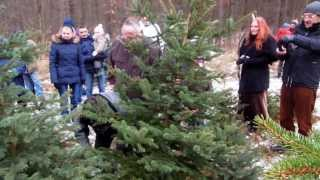 preview picture of video 'Start Weihnachtsbaum-Saison'