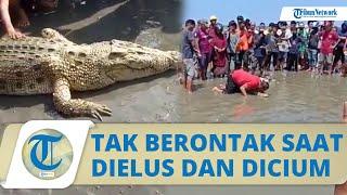 Viral Video Buaya Aneh Berwarna Kuning di Pantai Kolaka, Tak Berontak saat Dielus dan Dicium Warga