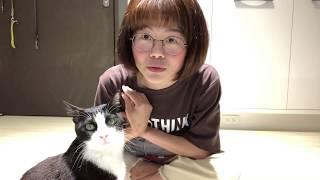 別讓貓咪討厭你