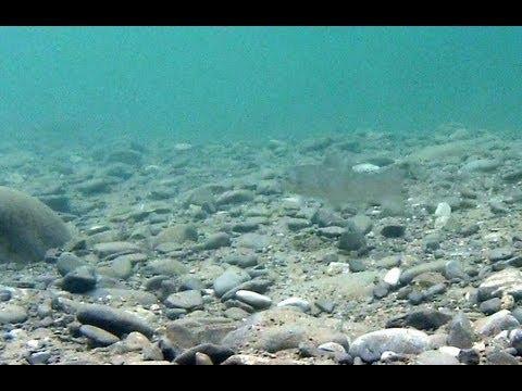 Truchas siguiendo señuelos (cucharillas y rapala) - Underwater video