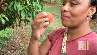 FREE & FEARLESS LIFE  E102  Georgia Peaches With Genevieve