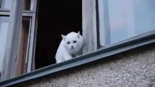 Кот защищает свой дом плюётся
