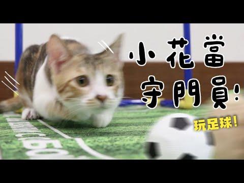 貓咪也會踢足球