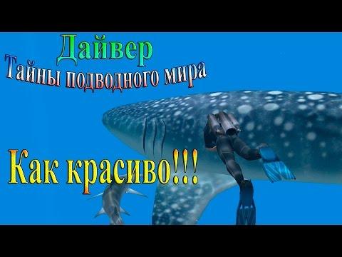 The DocenT Дайвер. Тайны подводного мира - Как красиво!!!