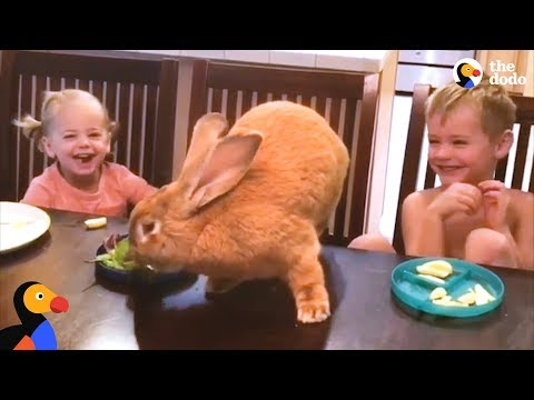 Giant Bunny Has The Best Family - COCOA PUFF | The Dodo