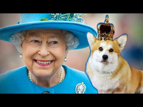 Momento fofura canina real: os corgis da rainha